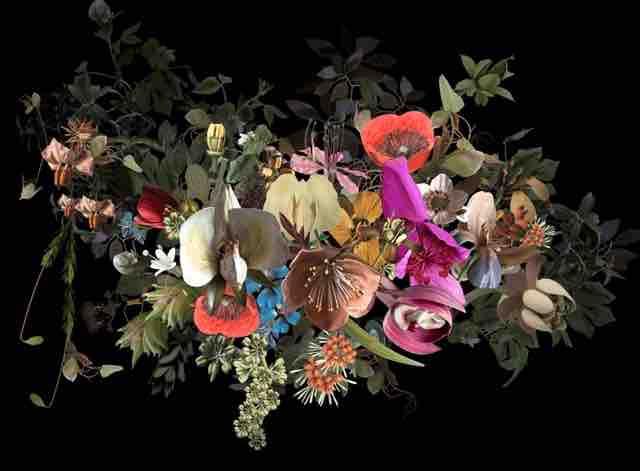 Botanical models für HP